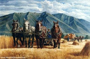 Amber Fields by Wendell B. Johnson
